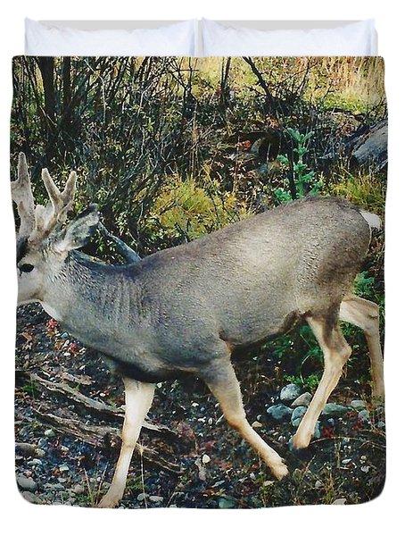 Mule Deer Duvet Cover by D Hackett