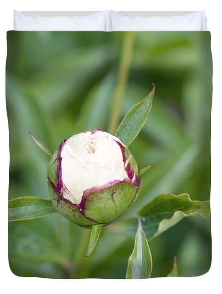 Paeonia Lactiflora Shirley Temple Duvet Cover by Jon Stokes