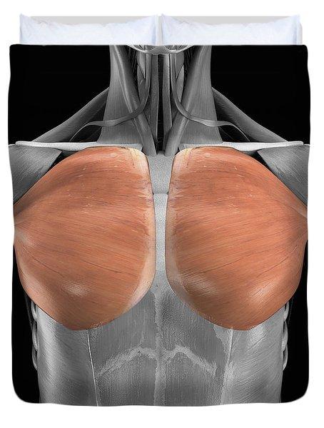 Pectoralis Major Muscles Duvet Cover