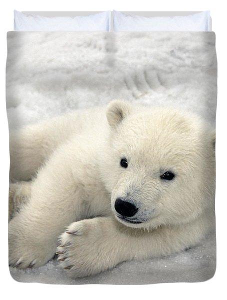 Polar Bear Cub Playing In Snow Alaska Duvet Cover by Mark Newman