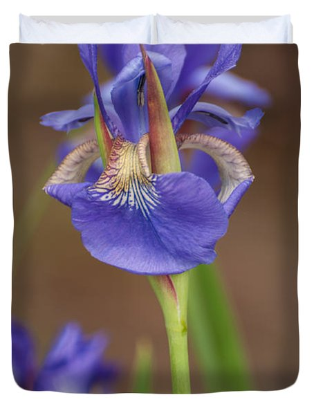 Purple Bearded Iris Duvet Cover by Brenda Jacobs