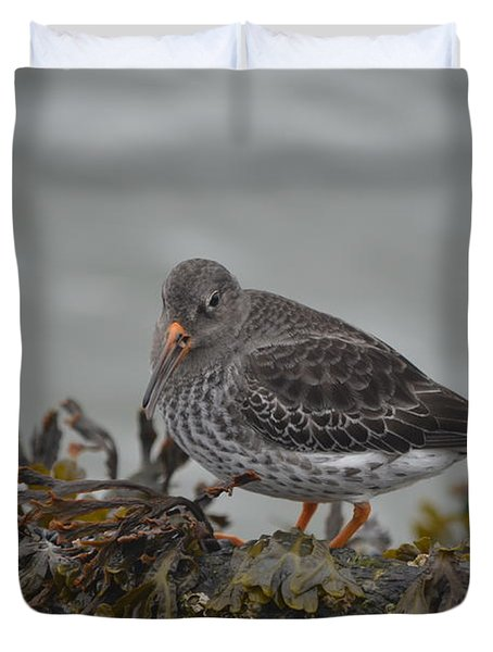 Purple Sandpiper Duvet Cover