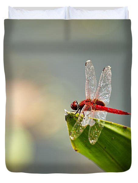 Red Dragonfly Duvet Cover by Ulrich Schade