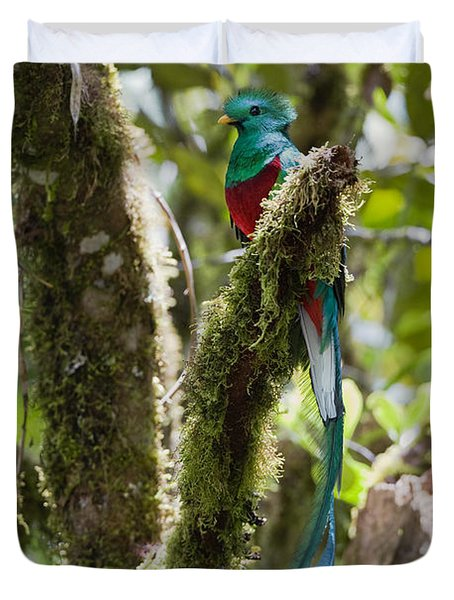 Duvet Cover featuring the photograph Resplendent Quetzal Male Costa Rica by Konrad Wothe