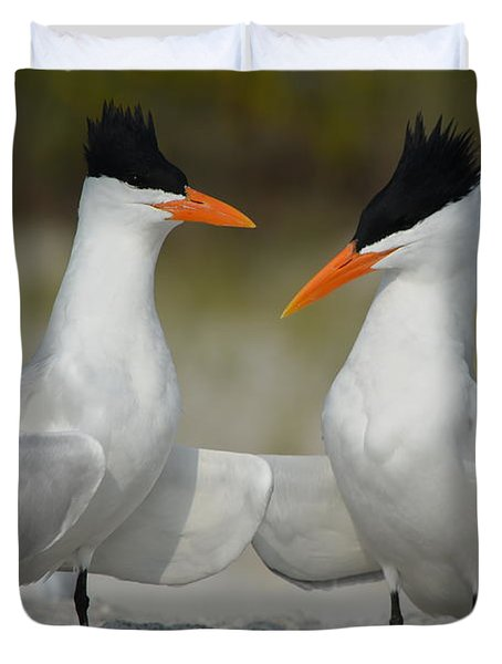 Royal Terns Duvet Cover by James Petersen