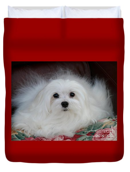 Snowdrop The Maltese Duvet Cover by Morag Bates