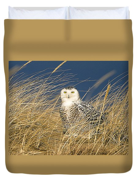 Snowy Owl In The Dunes Duvet Cover by John Vose