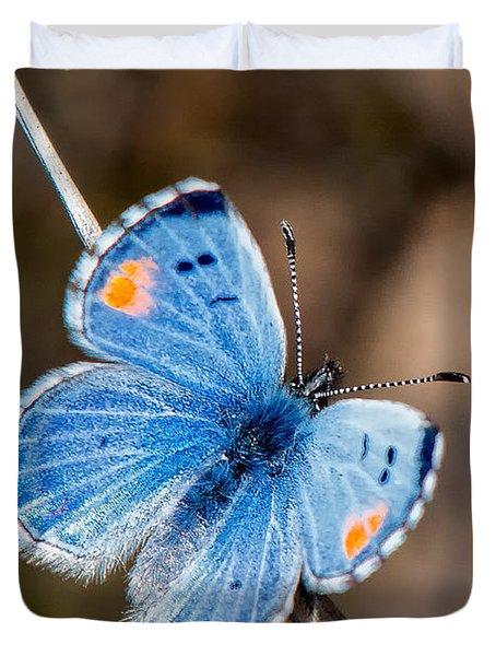 Sonoran Blue Duvet Cover by Jim Thompson