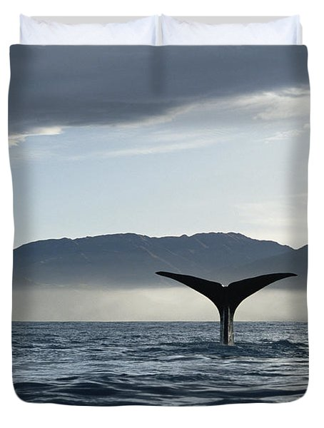 Sperm Whale Physeter Macrocephalus Duvet Cover by Flip Nicklin