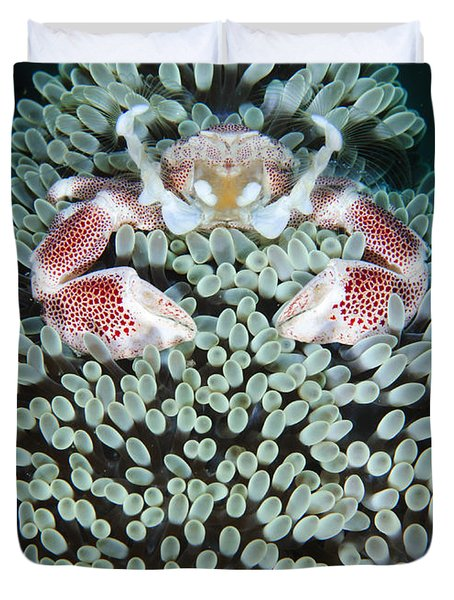 Spotted Porcelain Crab In Anemone Duvet Cover by Steve Jones