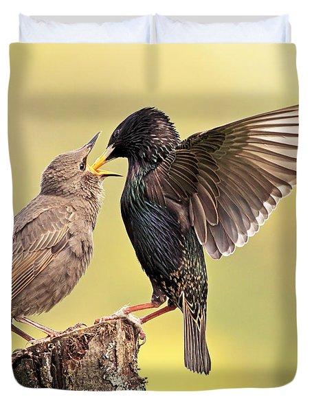 Starlings Duvet Cover by Grant Glendinning