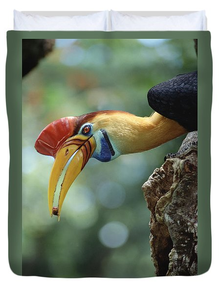 Sulawesi Red-knobbed Hornbill Male Duvet Cover by Tui De Roy