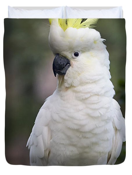 Sulphur-crested Cockatoo Displaying Duvet Cover