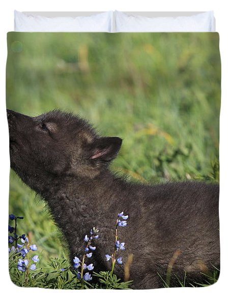 Timber Wolf Cub, Canis Lupus Duvet Cover