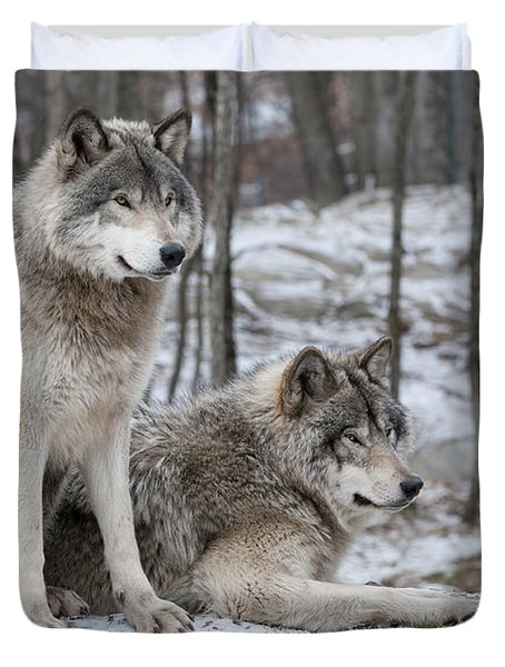 Timber Wolf Pair In Forest Duvet Cover by Wolves Only
