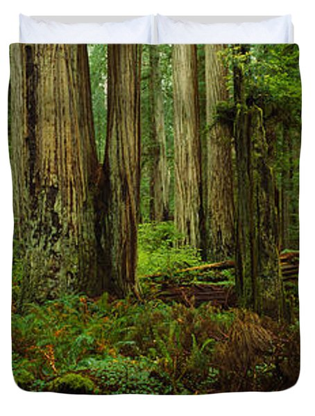 Trees In A Forest, Hoh Rainforest Duvet Cover