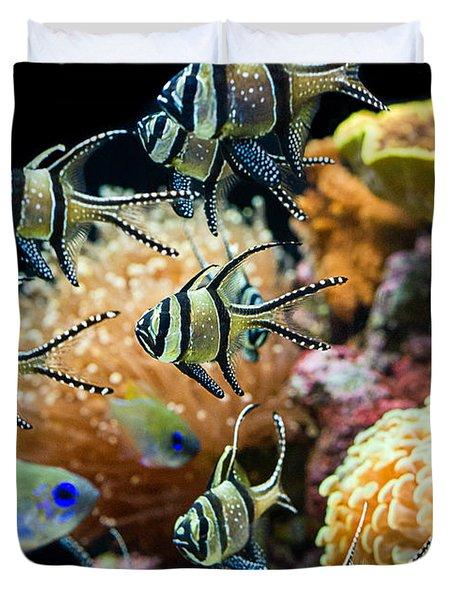 Tropical Wonderland - Banggai Cardinalfish Duvet Cover by Jamie Pham