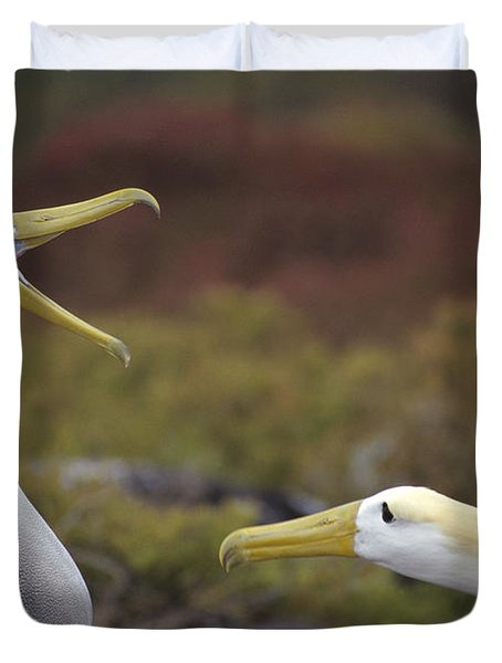 Waved Albatross Courtship Display Duvet Cover