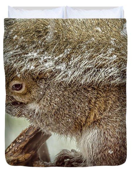 Winter Squirrel Duvet Cover by LeeAnn McLaneGoetz McLaneGoetzStudioLLCcom