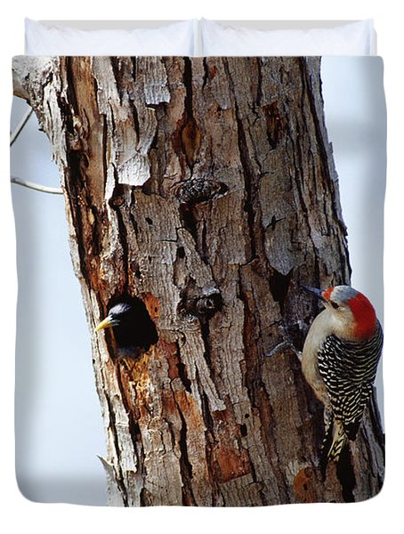 Woodpecker And Starling Fight For Nest Duvet Cover by Gregory G. Dimijian