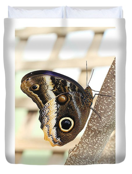 Yellow-edged Giant Owl Butterfly #4 Duvet Cover by Judy Whitton