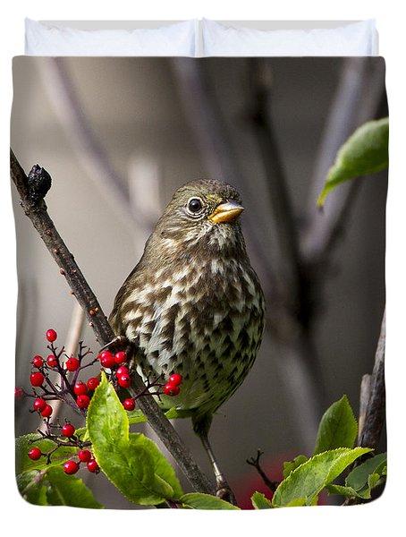 Fox Sparrow Duvet Cover by Doug Lloyd