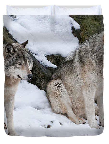 Timber Wolves Duvet Cover by Wolves Only