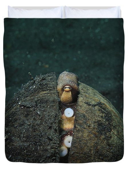 A Coconut Octopus, Lembeh Strait Duvet Cover by Steve Jones
