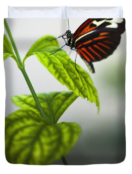 Butterfly Duvet Cover by Bradley R Youngberg