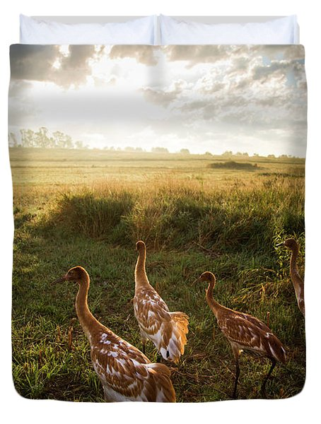 Whooping Crane Reintroduction, Direct Duvet Cover
