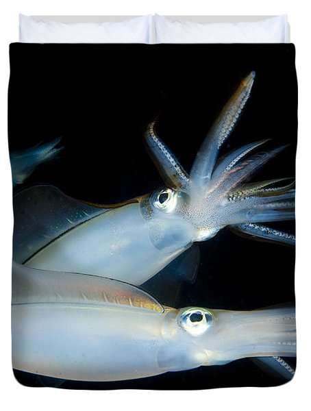 Bigfin Reef Squid Tending Eggs Duvet Cover by Steve Jones