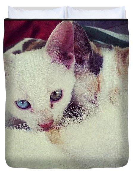Kittens Feeding Duvet Cover
