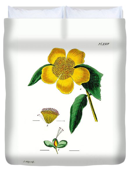 1788 Flower Drawing Restored Duvet Cover