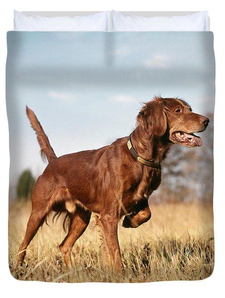 1960s Irish Setter Hunting Dog On Point Duvet Cover