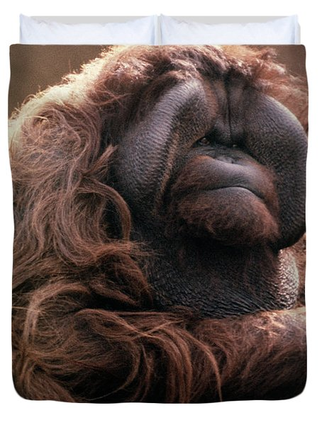 1970s Mature Adult Orangutan Pongo Duvet Cover