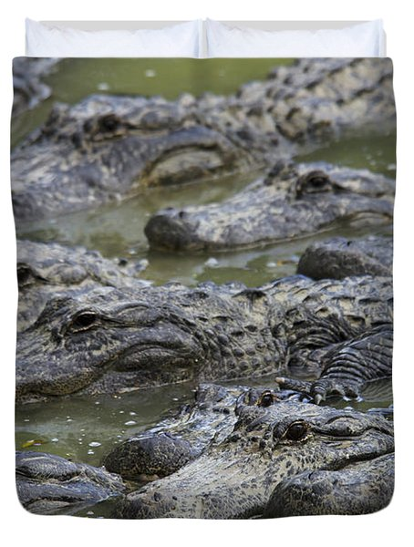 American Alligator Duvet Cover by Mark Newman