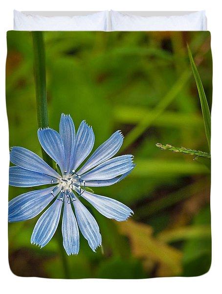 Blue Chicory Flower  Duvet Cover