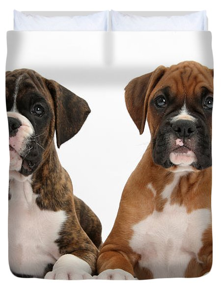 Boxer Puppies Duvet Cover by Mark Taylor