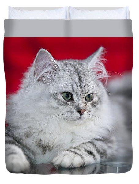 British Longhair Kitten Duvet Cover by Melanie Viola