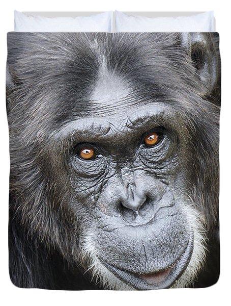 Chimpanzee Portrait Ol Pejeta Duvet Cover by Hiroya Minakuchi