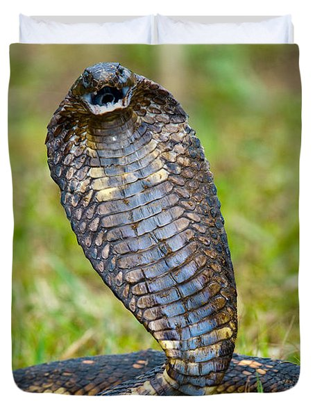 Close-up Of An Egyptian Cobra Heloderma Duvet Cover