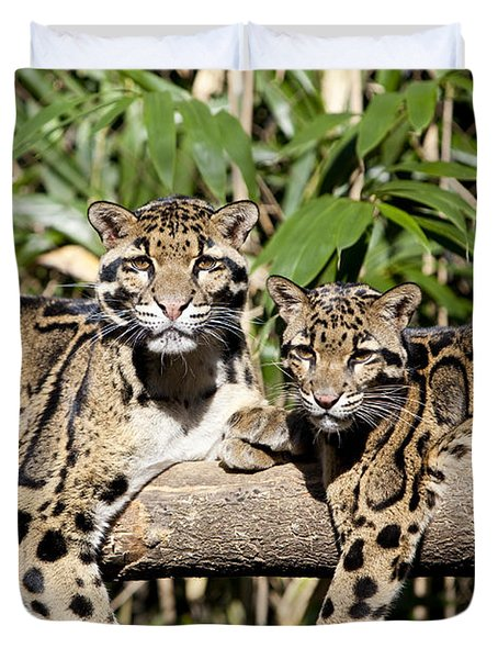 Duvet Cover featuring the photograph Clouded Leopards by Brian Jannsen