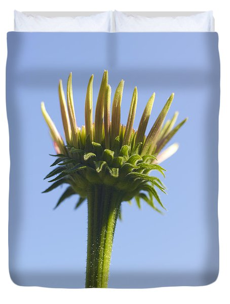 Cornflower Duvet Cover by Tony Cordoza