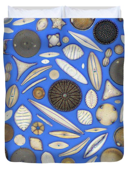 Diatoms Duvet Cover by Kent Wood