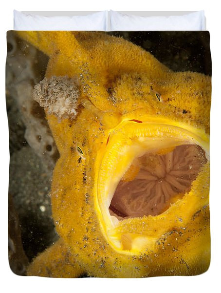Frogfish With Large Lure, Open Mouth Duvet Cover by Steve Jones