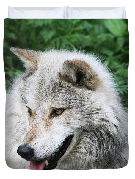 Duvet Cover featuring the photograph Gray Wolf by Alyce Taylor