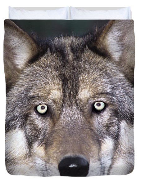 Duvet Cover featuring the photograph Gray Wolf Portrait Endangered Species Wildlife Rescue by Dave Welling