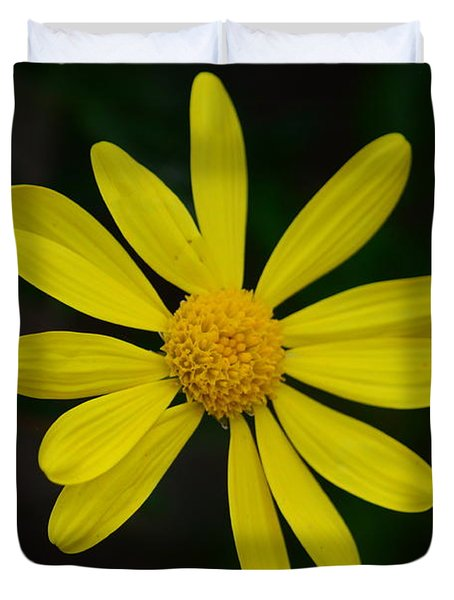 Isolated Daisy Duvet Cover by Debra Martz