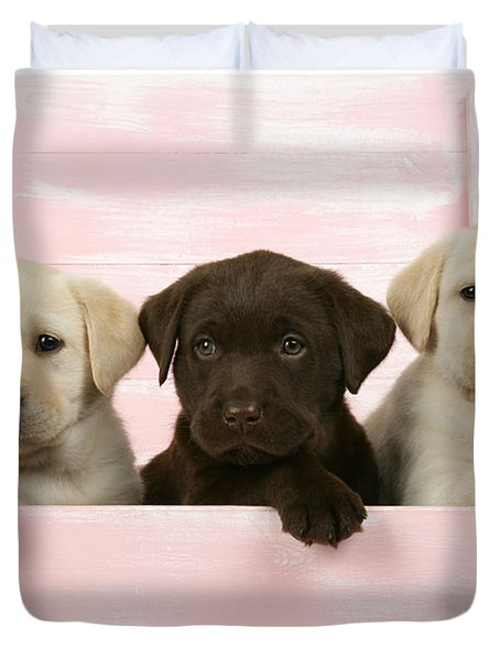 Labrador Retriever Puppies Duvet Cover by John Daniels