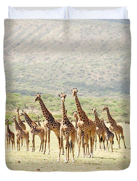 Masai Giraffes Giraffa Camelopardalis Duvet Cover